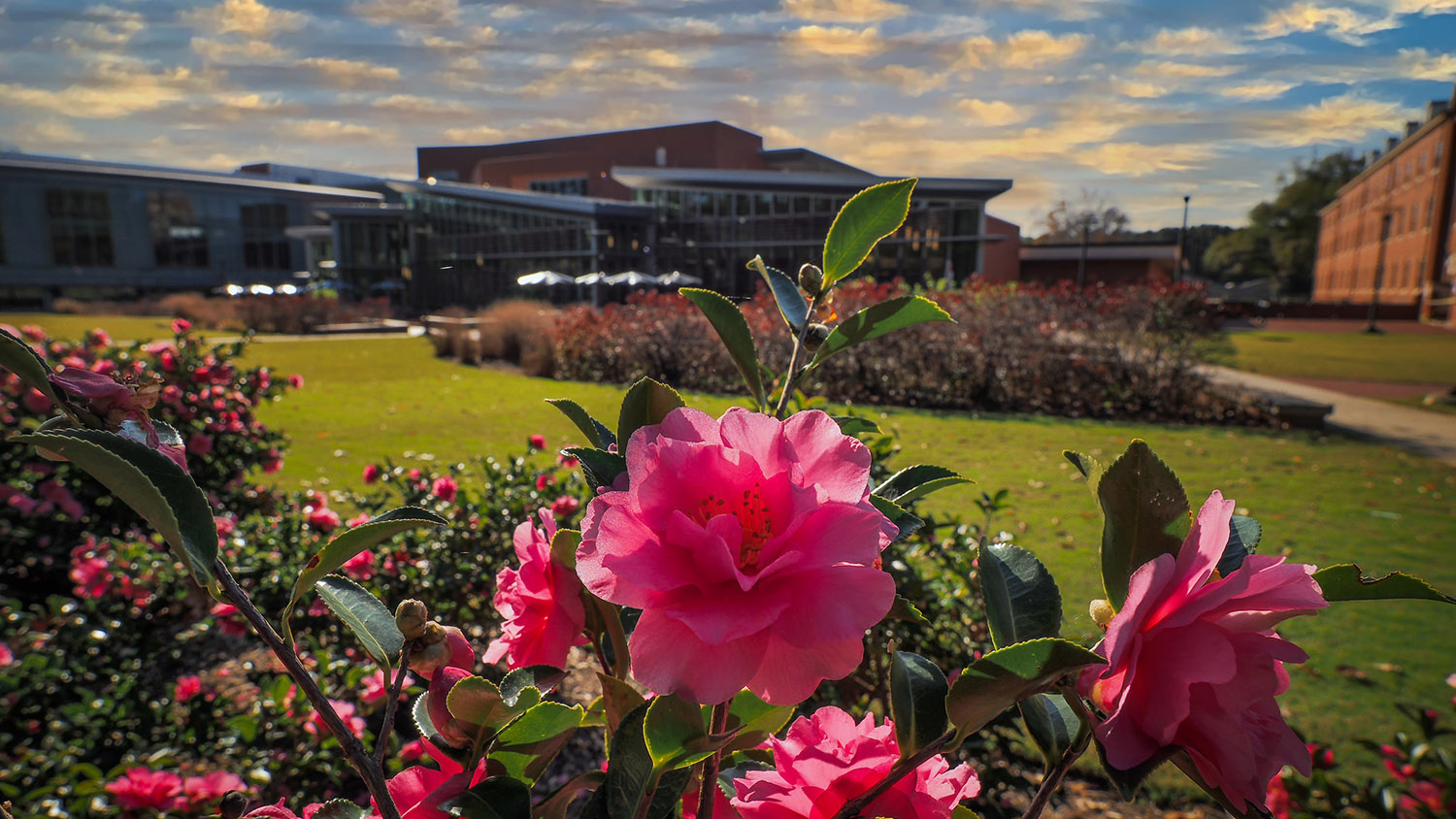 Flowers frame the Talley Student union during fall.