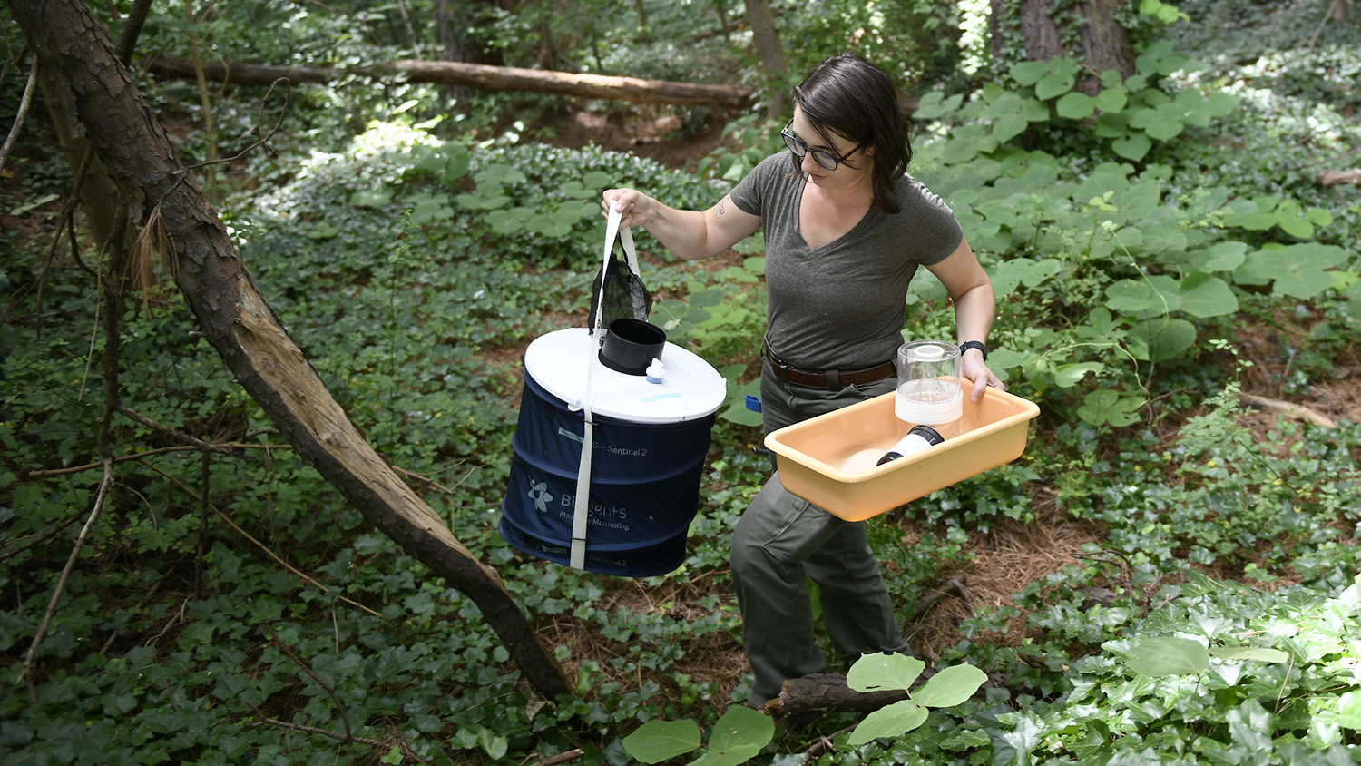 A student conducts research in a forest