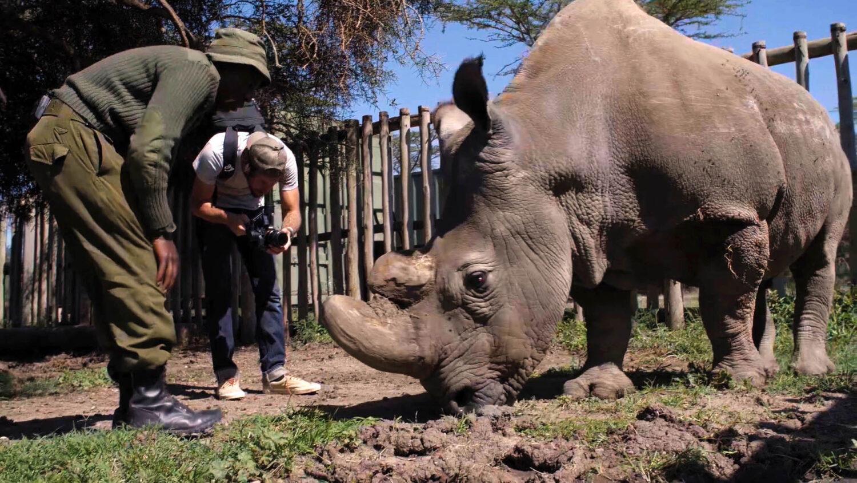 man filming rhino